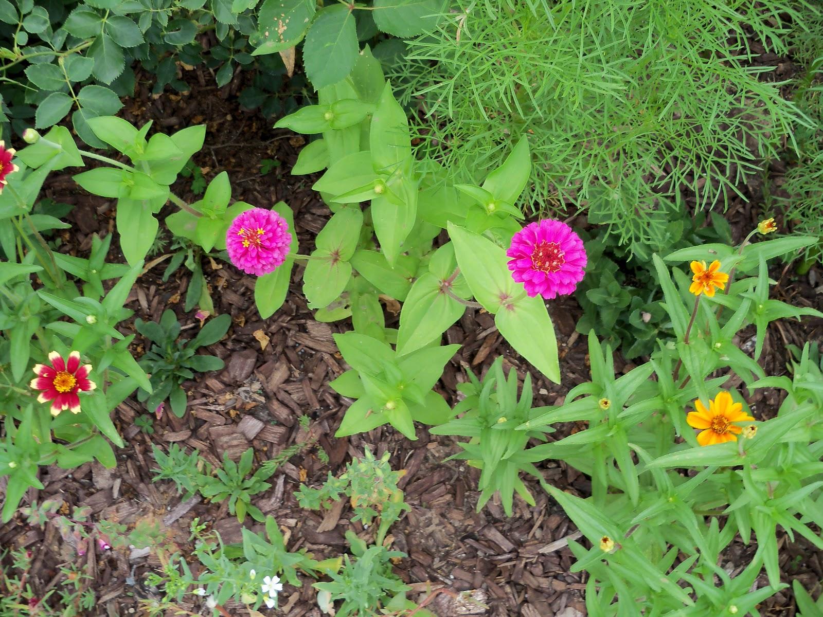 Gardening 2010, Part Two - 101_2935.JPG