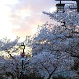 2014 Japan - Dag 8 - marjolein-IMG_1221-0085.JPG