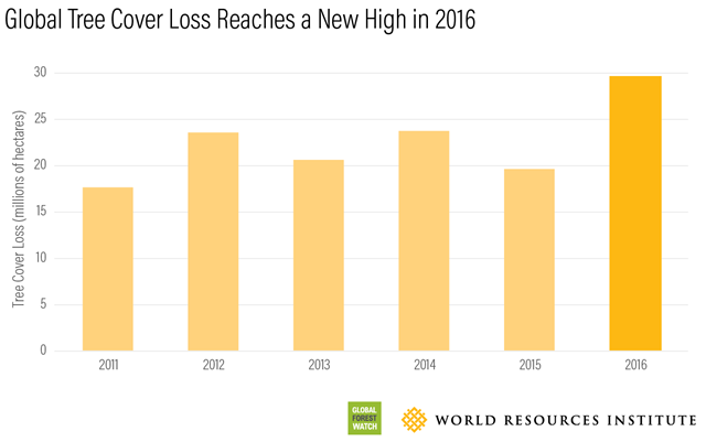 Global tree cover loss, 2011-2016. Graphic: Global Forest Watch