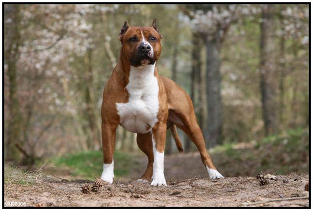 Somerset's Scooby Dooby Doo