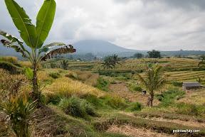 Tarasy ryżowe w Jatiluwih
