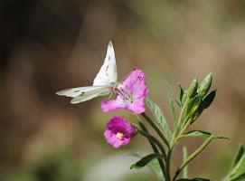 mariposas yotros 019.JPG
