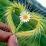 malik atif's profile photo