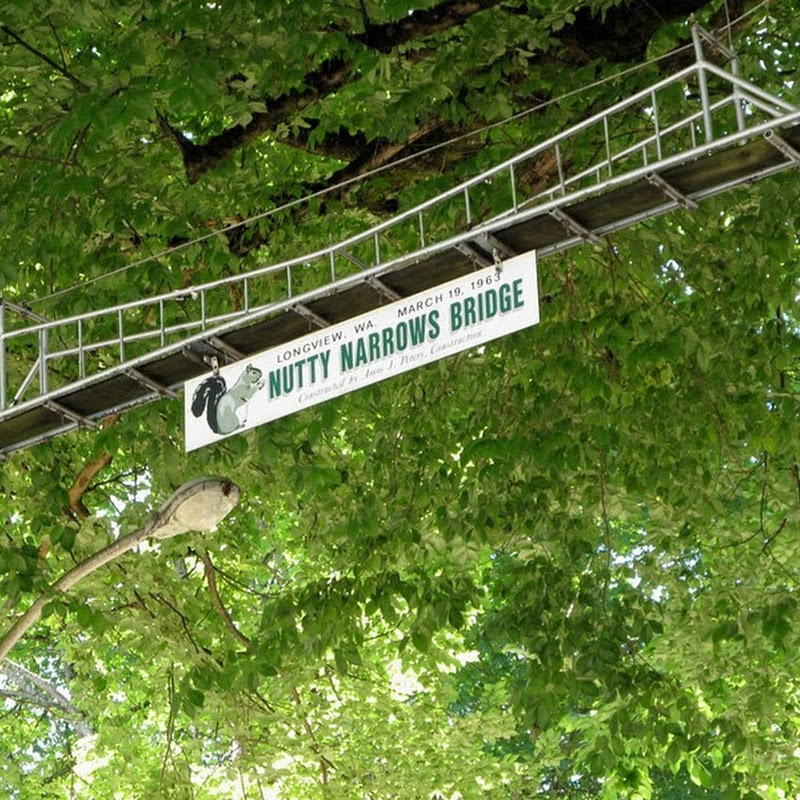 The Nutty Narrows Bridge for Squirrels