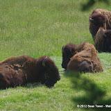 05-11-12 Wildlife Prairie State Park IL - IMGP1590.JPG