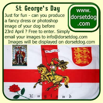 St George's Day fancy dress competition on www.dorsetdog.com