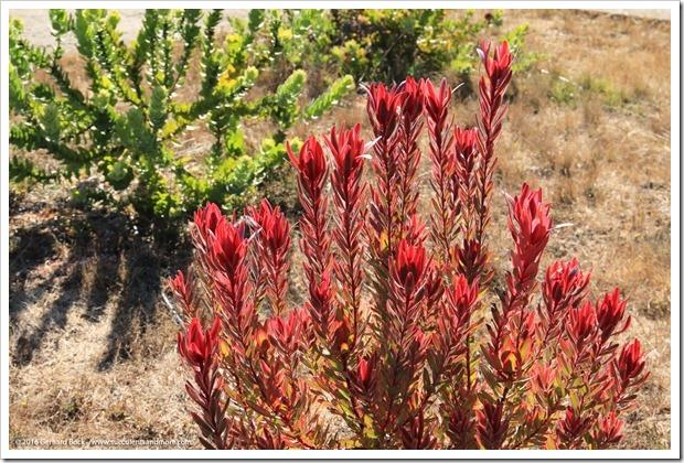 160813_UCSC_Arboretum_050