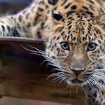 Animal 013_1280px.jpg