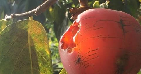 Novembre: mese dei frutti dimenticati