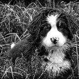– Ganni i regnvejr 9 uger gammel