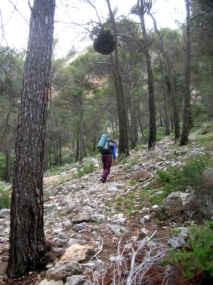 Camino del Sector Las Cuevas