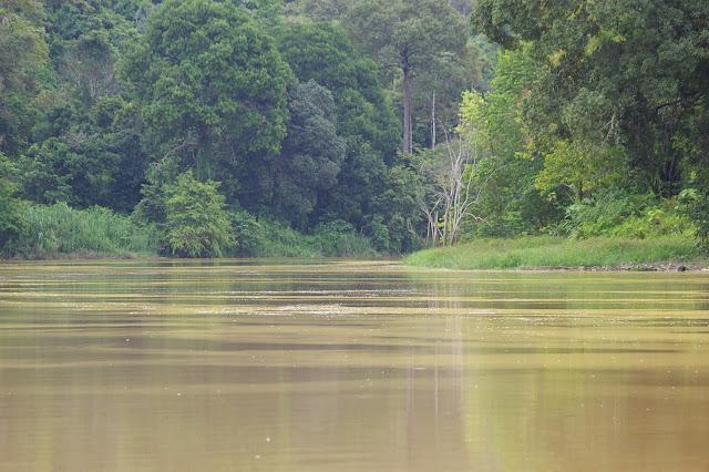 Kinabatangan. Sukau (Sabah), 13 août 2011. Photo : J.-M. Gayman