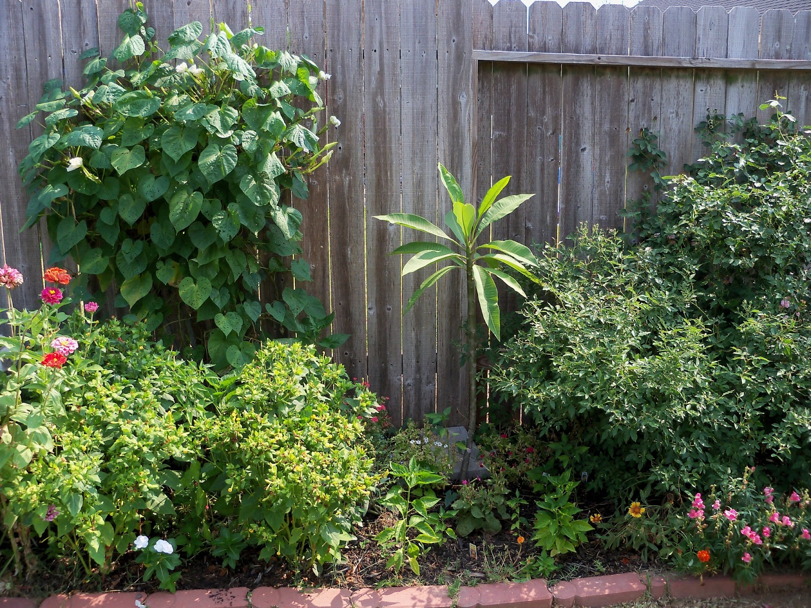 Gardening 2011 - 100_9319.JPG