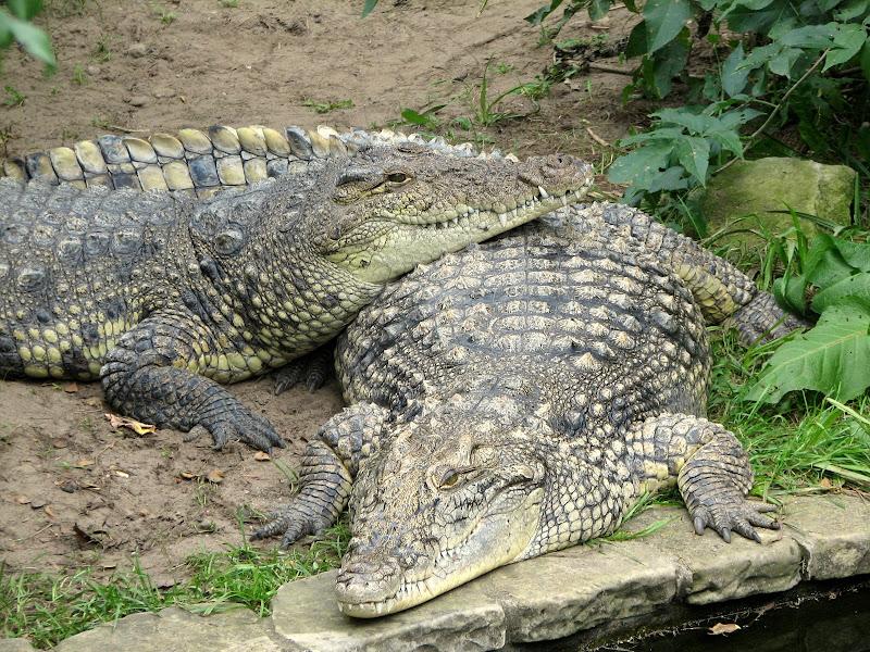 Warszawskie zoo - img_6325.jpg