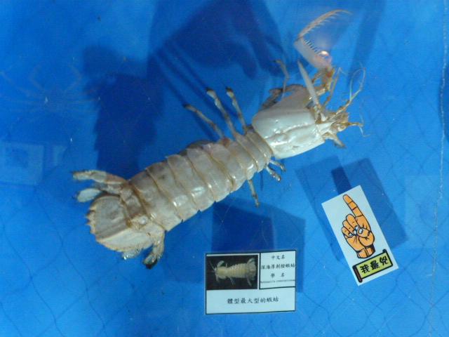 TAIWAN.Toucheng .musée du crabe situé au Pei Kan Resort, surfers,maison Japonaise du chef de gare - P1080707.JPG
