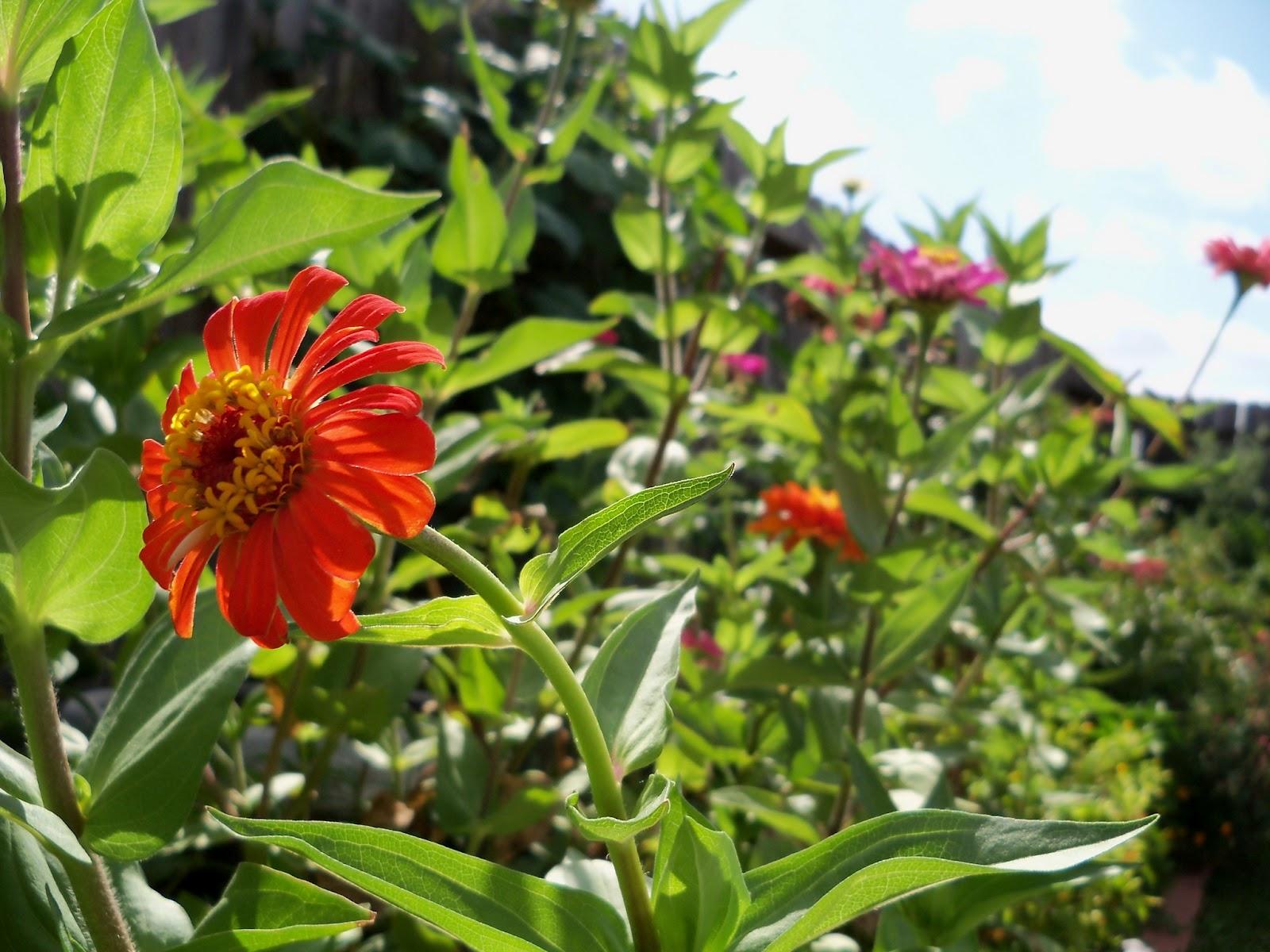 Gardening 2011 - 100_9980.JPG