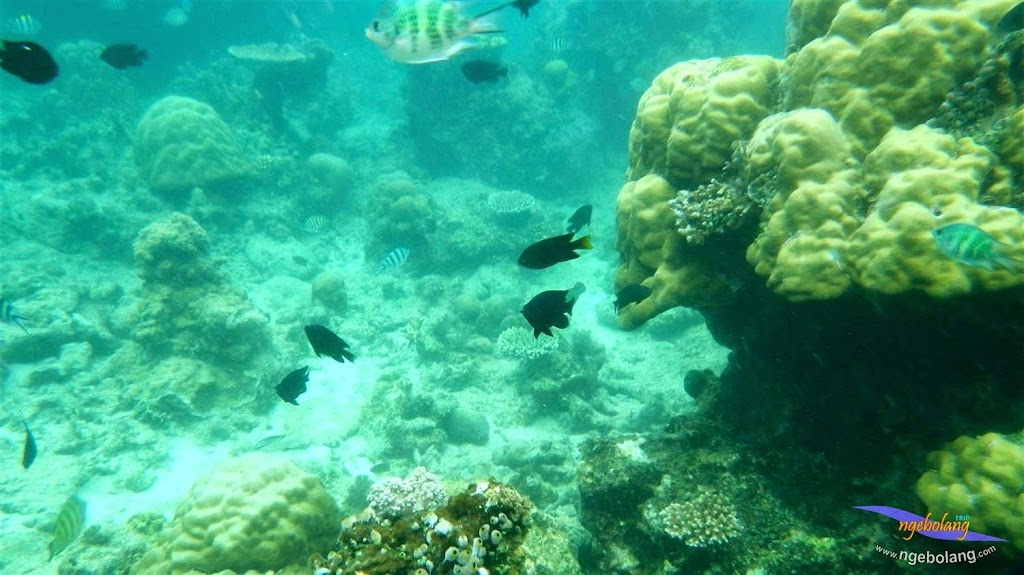 Pulau Harapan pentax 21-22 Maret 2015  18