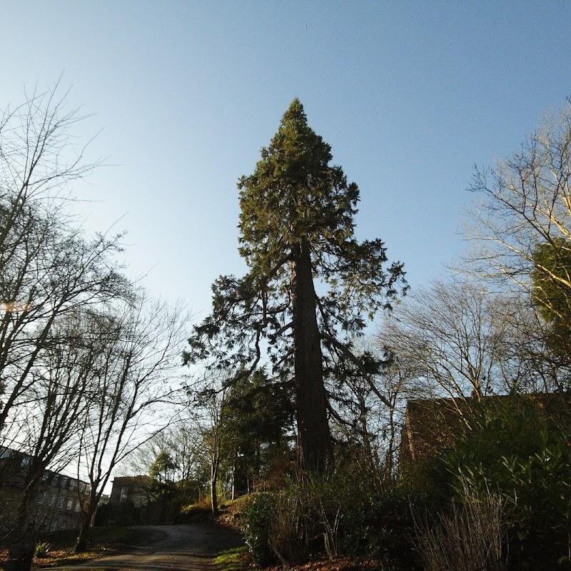 Stowe_Trees_06.JPG