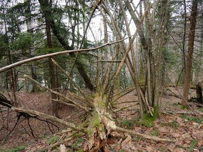 Na Plitvicama je i trulo stablo lijepo