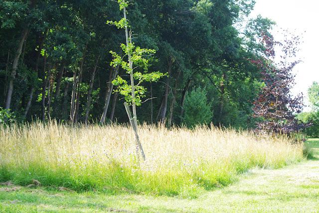 """Le """"pré entomologique"""". Les Hautes-Lisières (Rouvres, 28), 17 juillet 2013. Photo : J.-M. Gayman"""