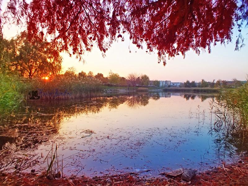 lac parc marghiloman buzau