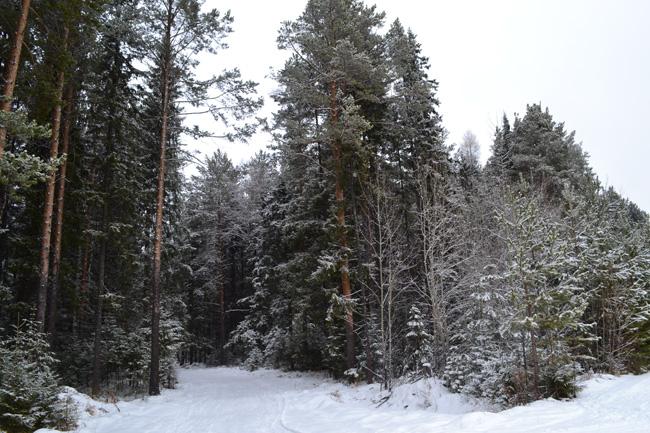 снежный_лес_snezhnyy_les