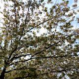 2014 Japan - Dag 11 - tom-SAM_0586-0008.JPG