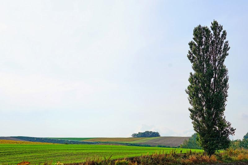 美瑛 ルベシベの丘 写真16