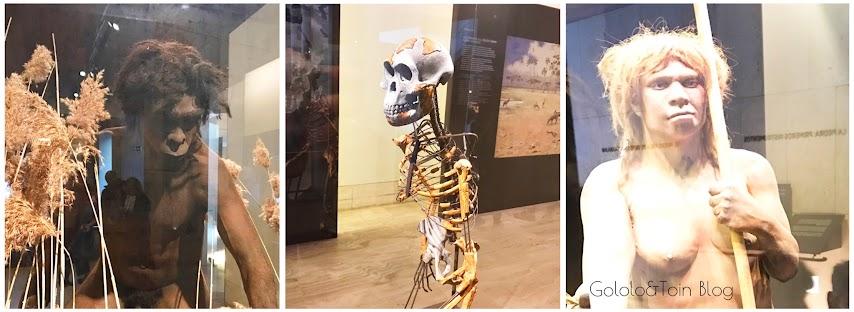 Réplicas de los primeros homínidos en el museo arqueológico nacional