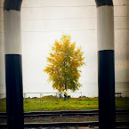20121018-01-railway-station-tree-lake.jpg
