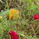 Gardening 2010, Part Three - 101_5232.JPG