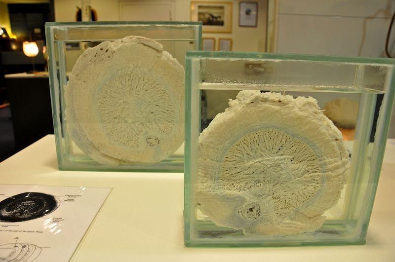 icelandic-phallological-museum-7