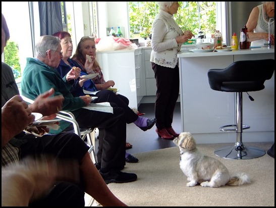 Star of the show (next to our gracious host Delyse of course) is Poppy a Shih Tzu - and  a master in the art of begging! Photo courtesy of Dennis Lyons.