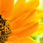 Flower 026_1280px.jpg