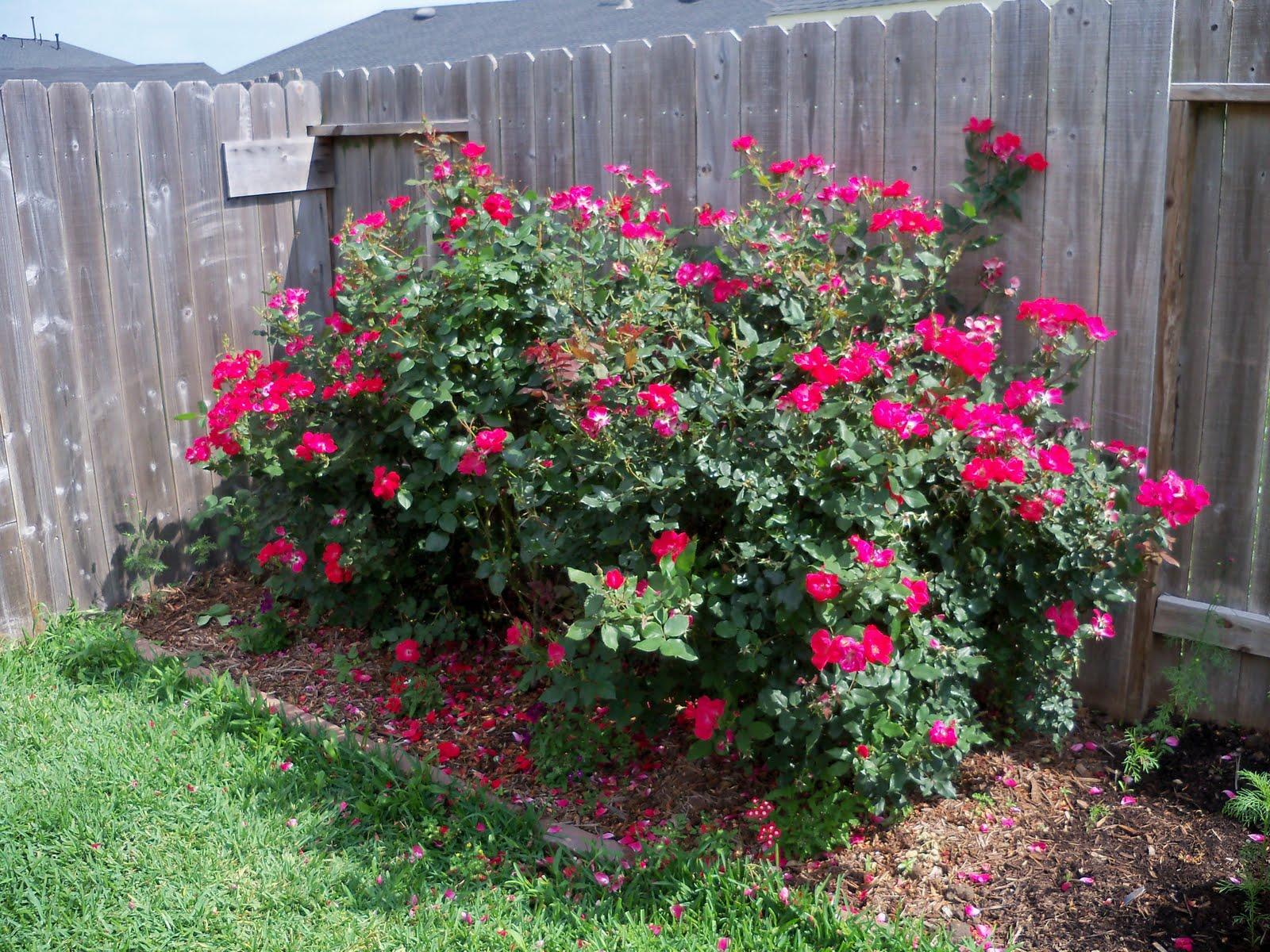 Gardening 2010 - 101_1715.JPG
