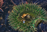 """Sea Life"" by Barbara Lippert -- 3d Place Digital Special ""A"" Group"