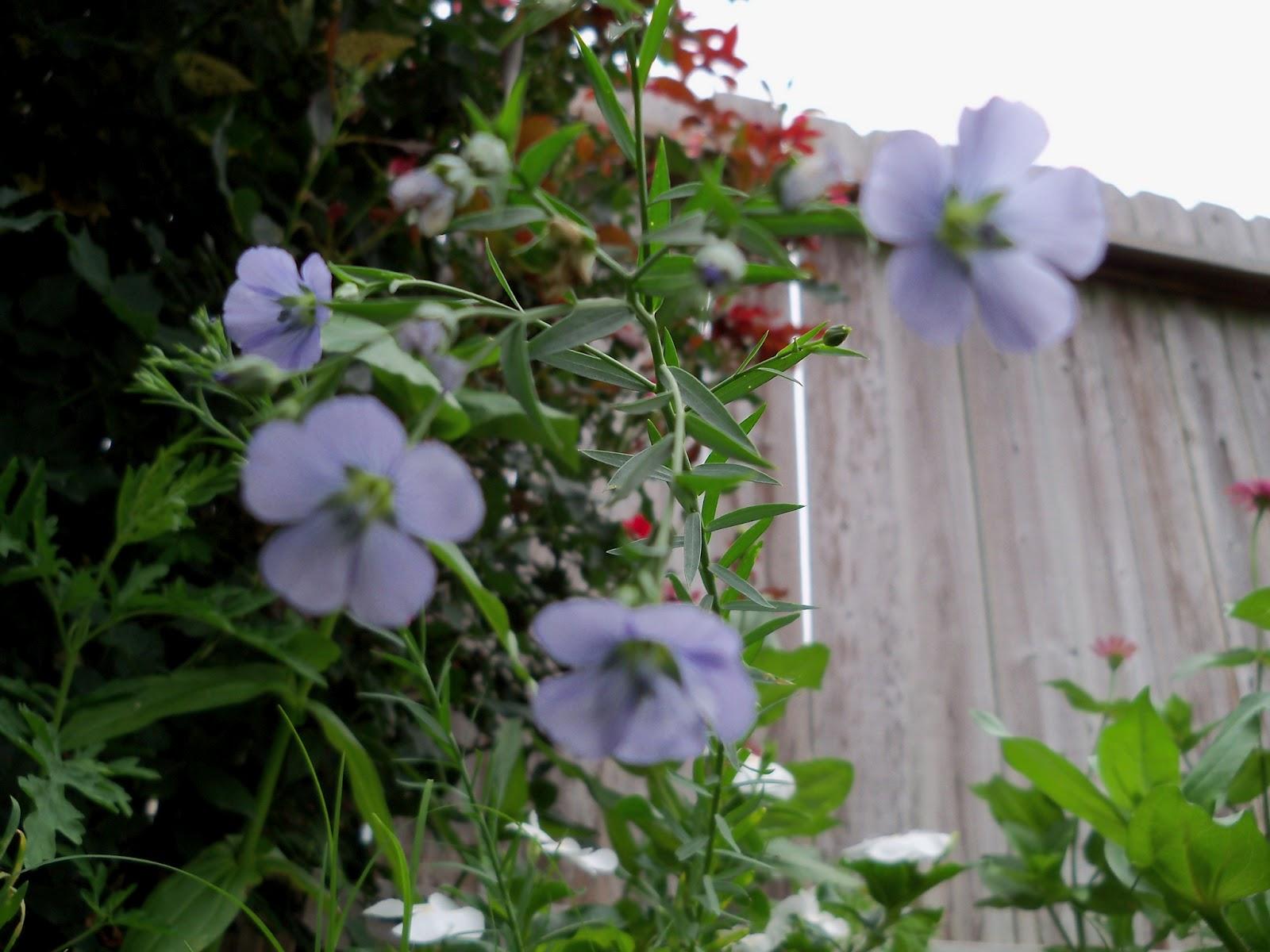 Gardening 2012 - 115_1968.JPG