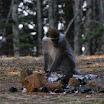 2011-02-11 07-12 pierwsze widziane przez nas malpy na wolnosci.JPG