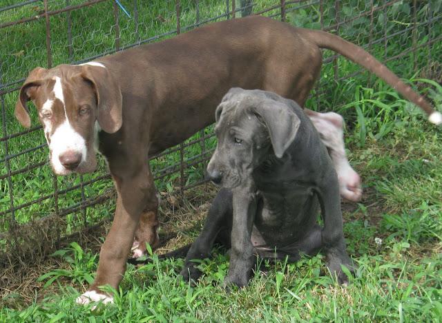 Jasper & Celeste are buds!
