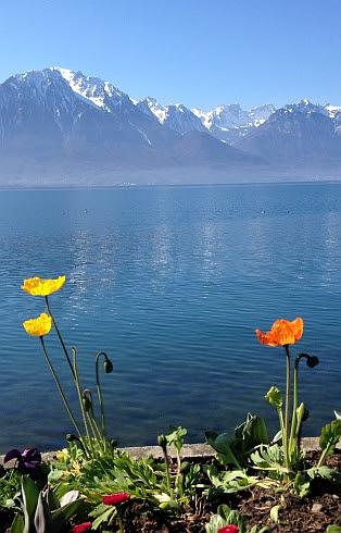Blumen an der Ufer-Promenade des Genfer Sees in Montreux