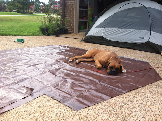 Nitro, enjoying the warmth of the tarp on a 90* day
