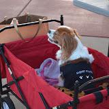 Pet Blessing 2015 6.JPG