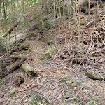 Meandering track alongside Wollombi Brook (364838)