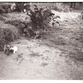 n010-020-1966-tabor-sikfokut.jpg