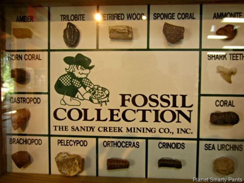 Typical-Fossils-CA