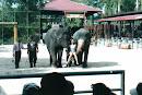 Nong Nooch, bei Bang Sa-re, 2001