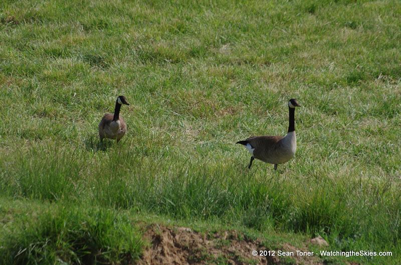 05-11-12 Wildlife Prairie State Park IL - IMGP1564.JPG