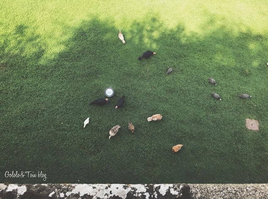 Animales en el Parque de la Taconera en Pamplona