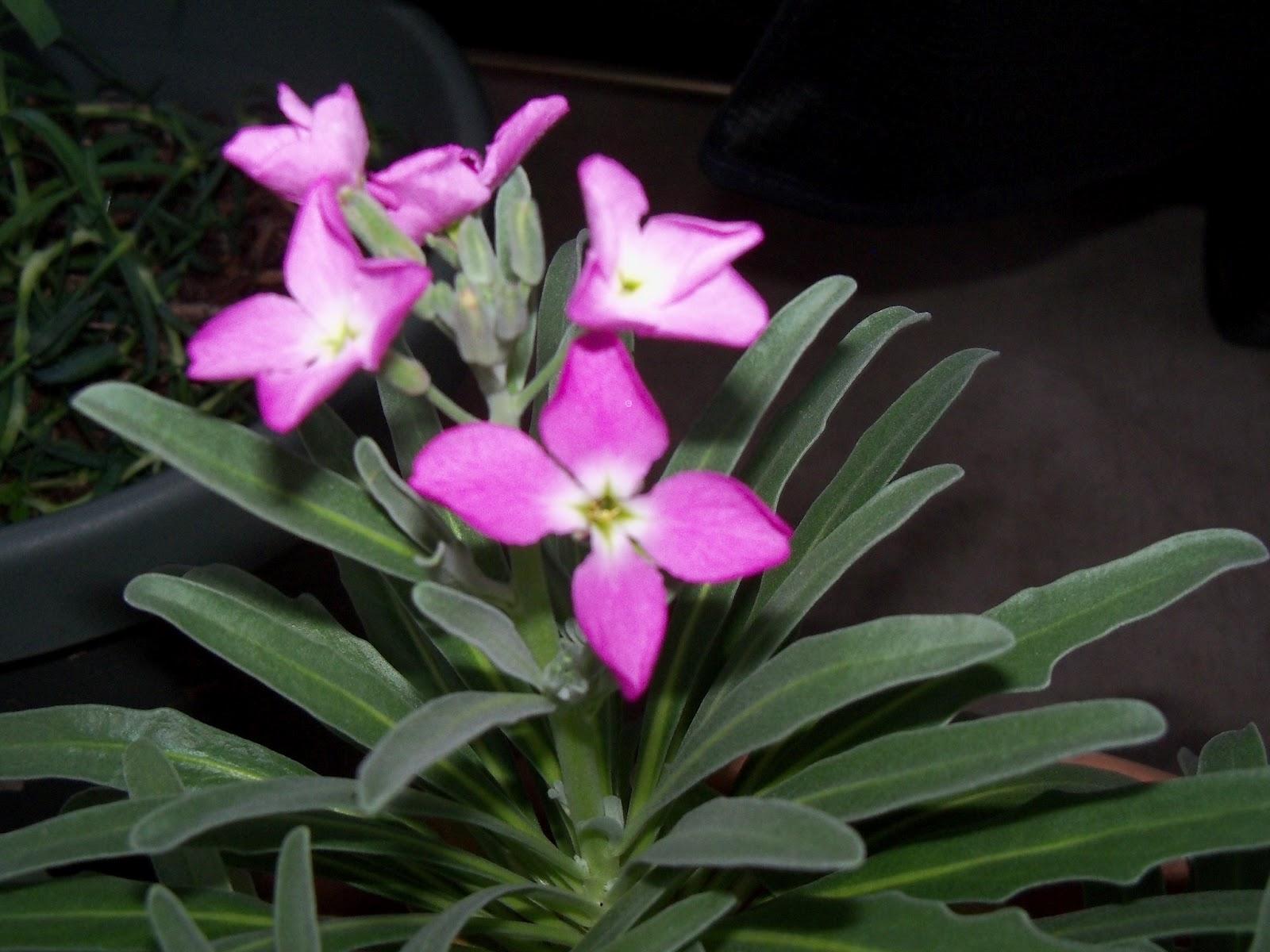 Gardening 2012 - 115_1249.JPG