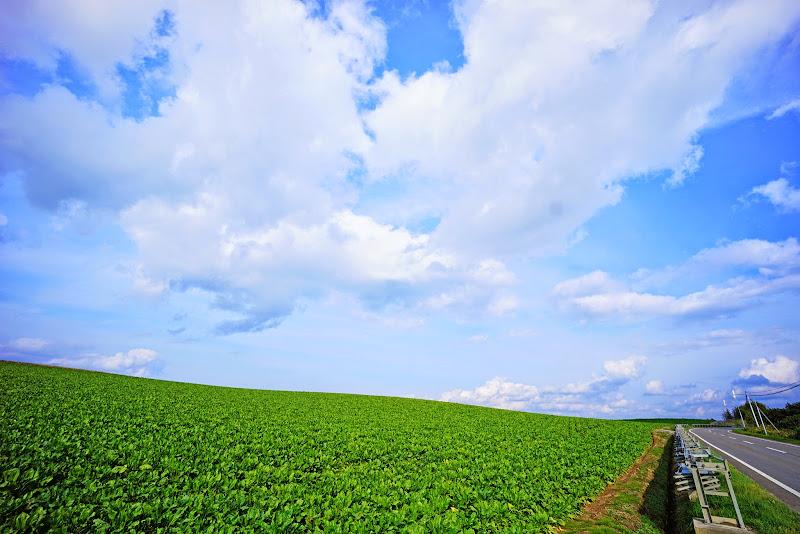 美瑛 ルベシベの丘 写真8